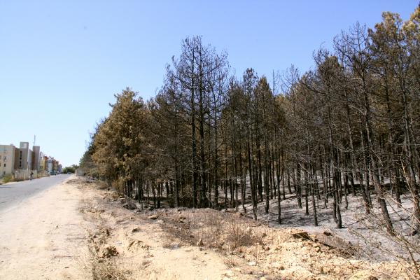 Пожар във Влас